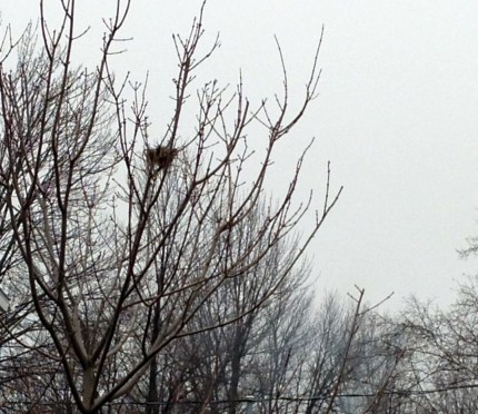 birds nest 2012 (1077 x 934)