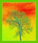 boarder.heatmap.2012 (524 x600)