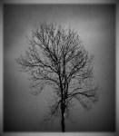 infrared fil, lomo-ish, boarder.2012 (524 x600)
