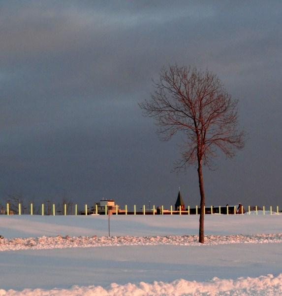 single tree.2012 (573 x 600)