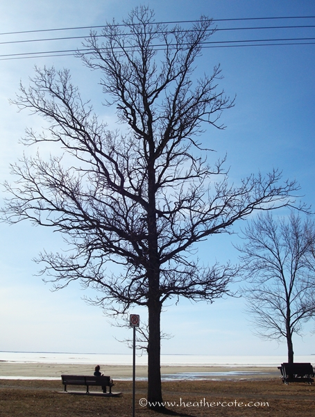 champlain park tree.2010