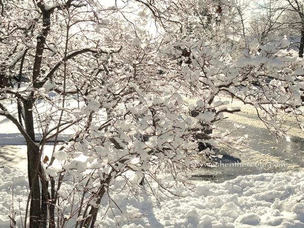 snow day 14.2013