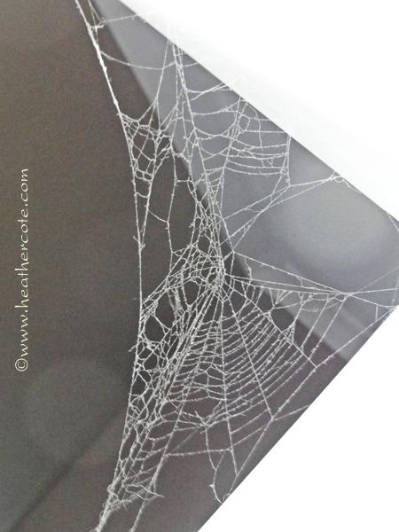spicer web.2013