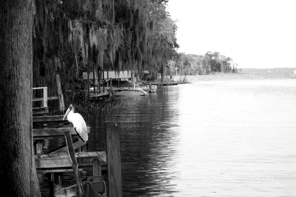 Leesburge Florida cropped.2012 grayscale
