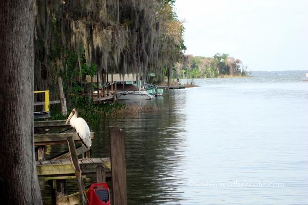 Leesburge Florida cropped.2012
