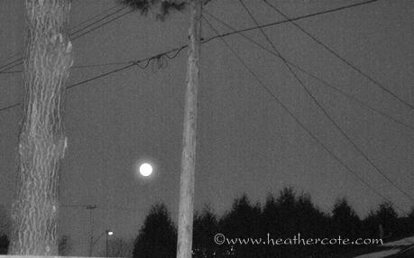 blue moon2...2013greyscale
