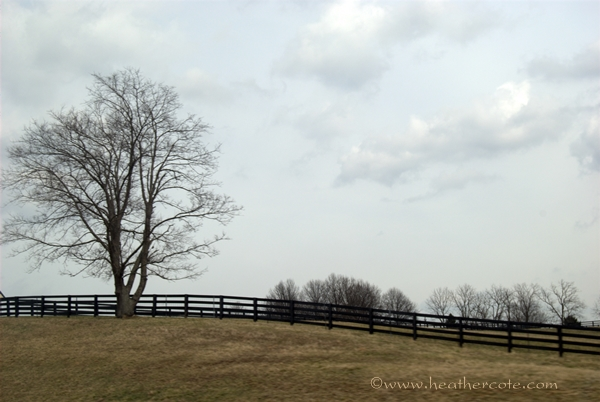 lone.tree.kentucky.2013