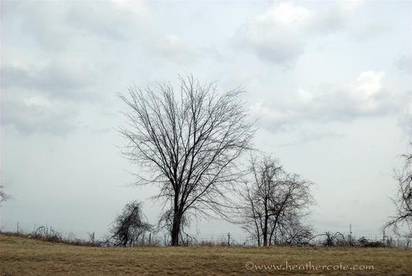 more.trees.Kentucky.2013