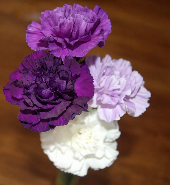 purpl.mauve.carnations.2013