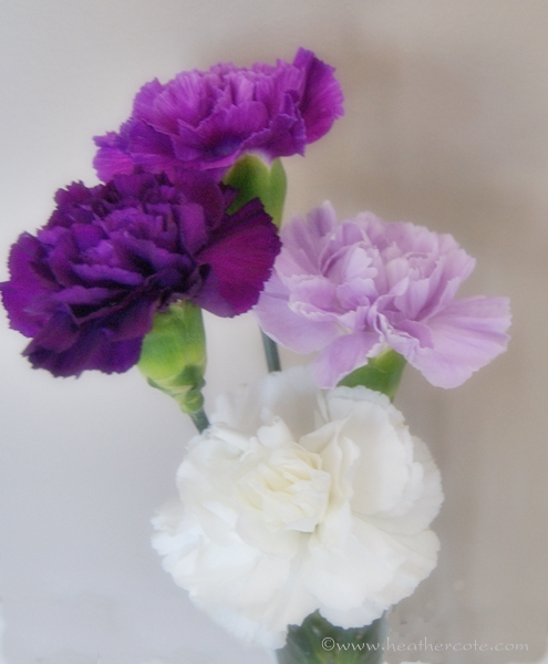 purple.white.carnations4.2013...