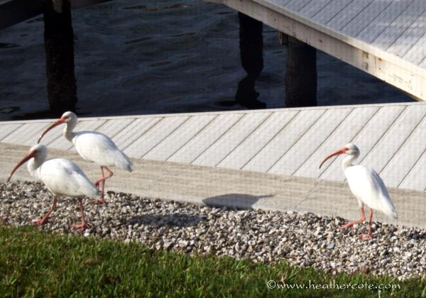 threebirds.marco.2013