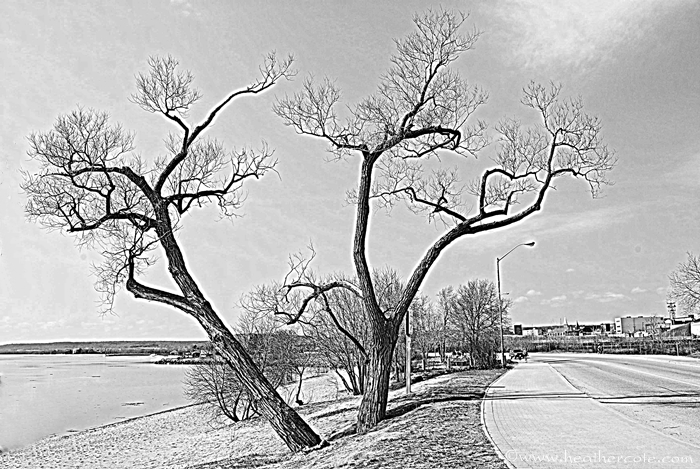 b.w.HDR-ish.twobenttrees.2013