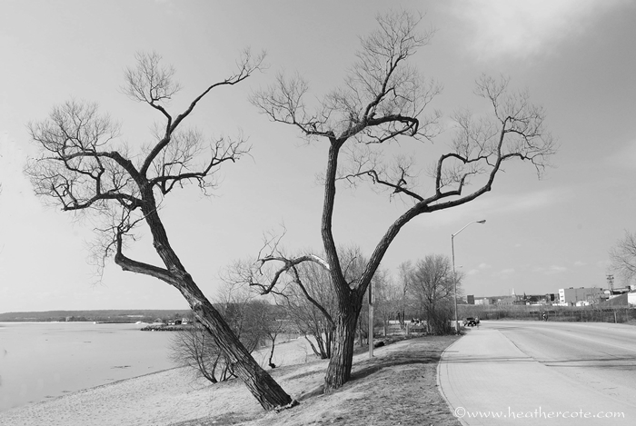 b.w.twobenttrees.waterfront.2013