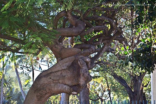 bent.tree.kw2.2.013