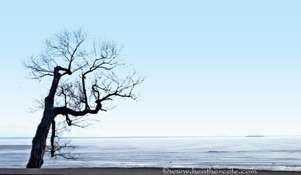 gnarly.tree.lake.N.20132