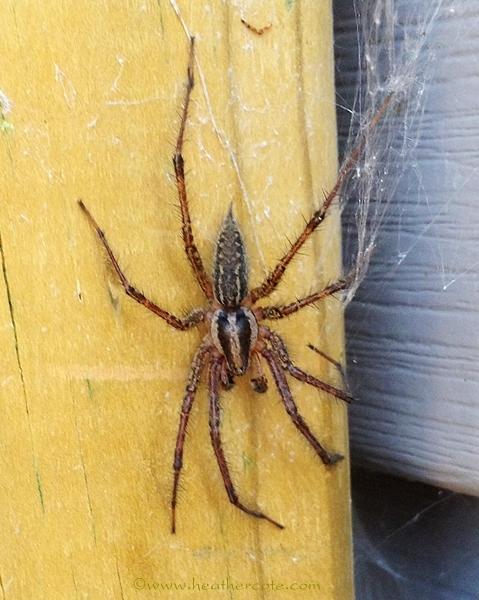 spider.2.2012