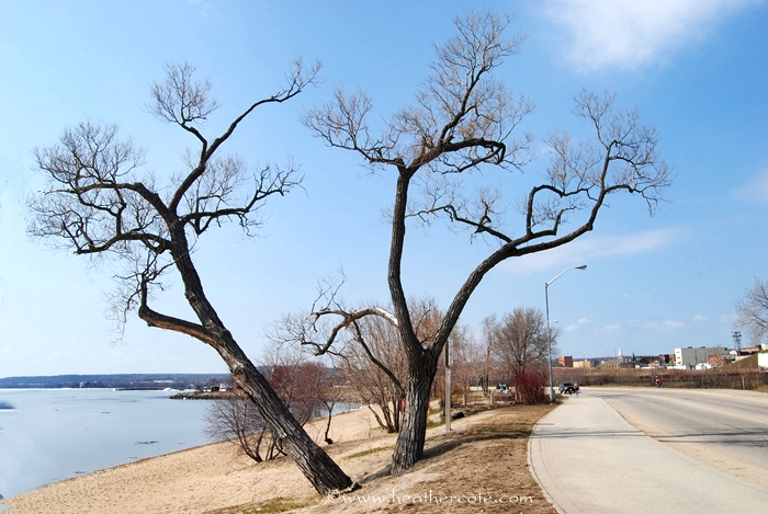 two.trees.bent.waterfront.2013