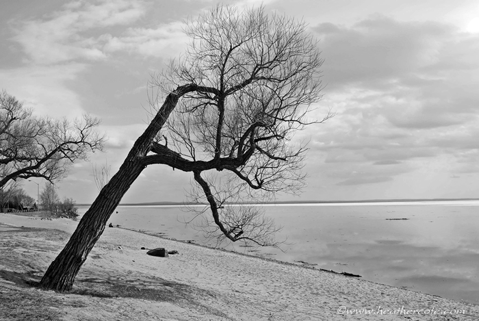 bent tree.waterfront.2013