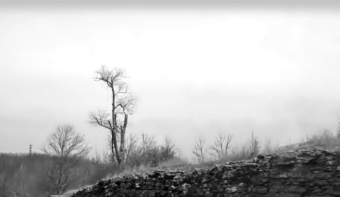 tree.2.2013