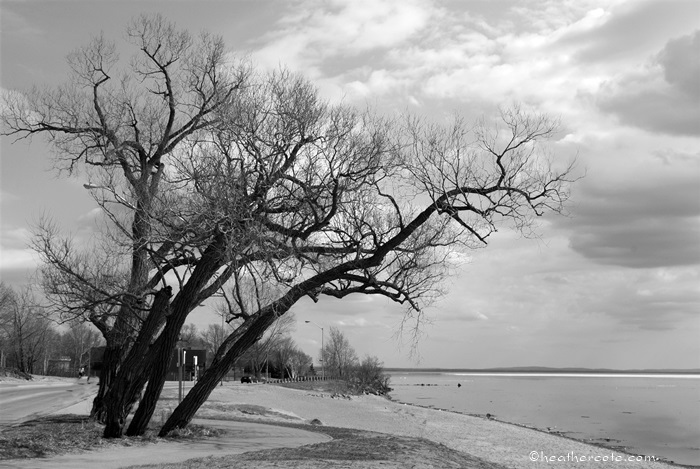 waterfront.trees.2013