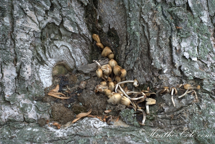 tree.mushrooms.2013