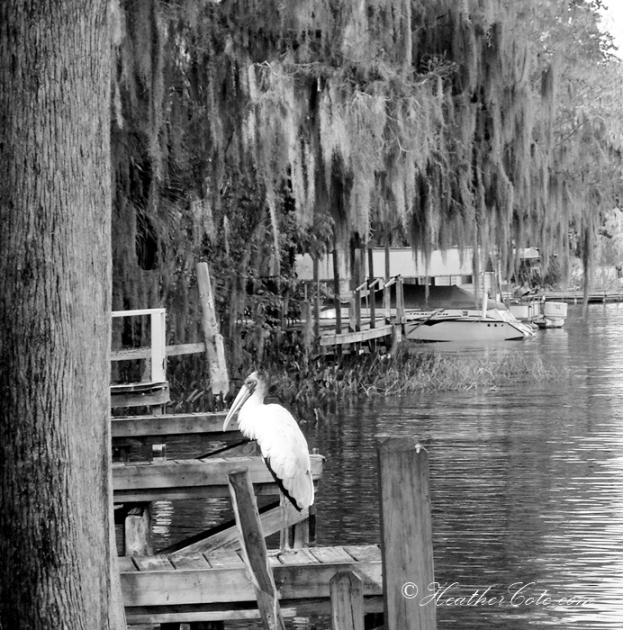 ...Leesburg Florida....2013