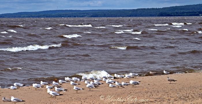 seagulls.2013