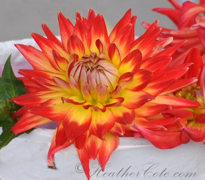 orange.yellow.flower.2013
