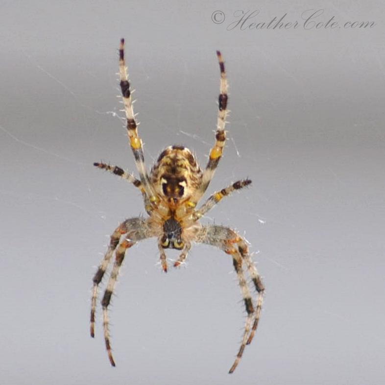 spider.4..2013