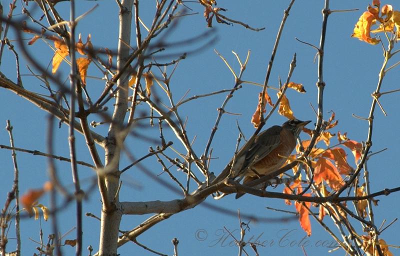 bird.singing.2.2013