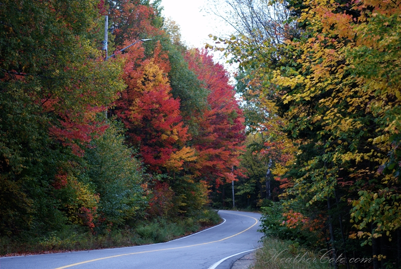 fall.colors.cemetary.road.c..2013