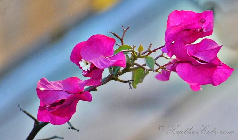 flower.2013