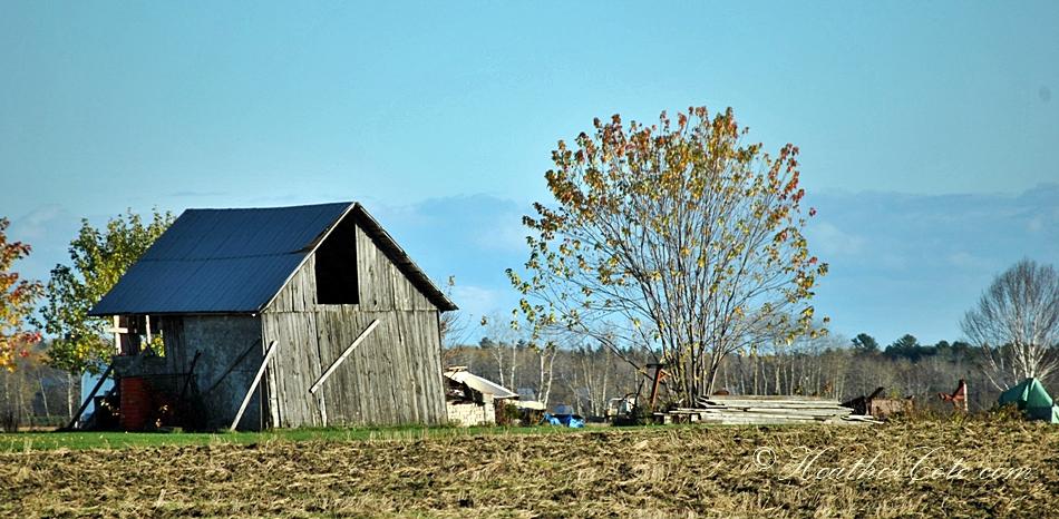 shack.2013 (2)