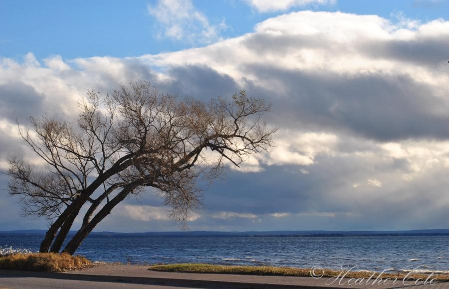 trees.sky...2013
