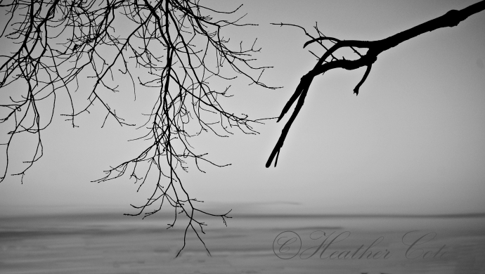 branches.sunset.2. 2013