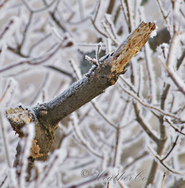 broken.branch.2013