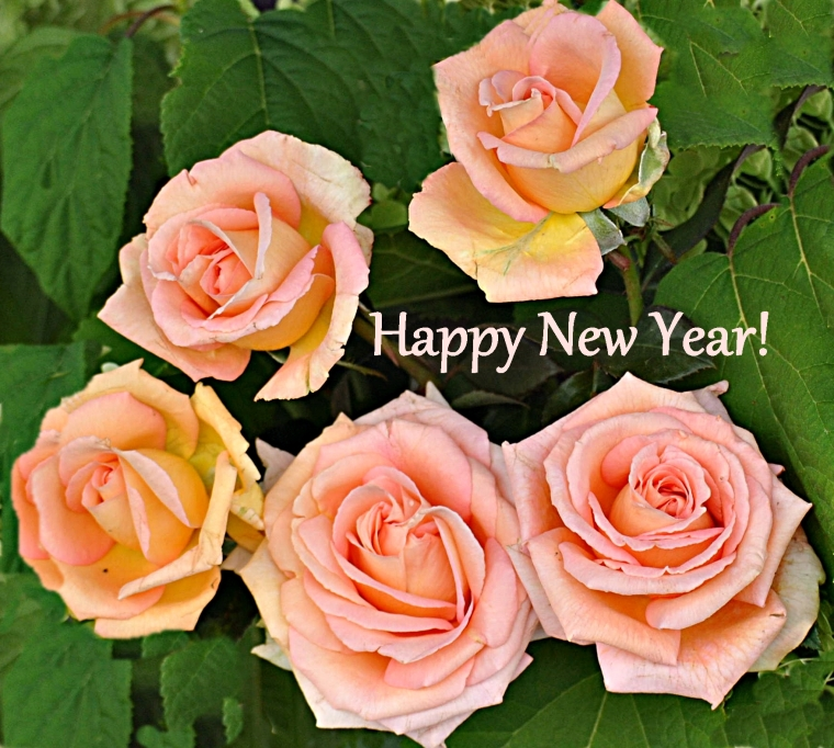 roses.newyears.2013peach