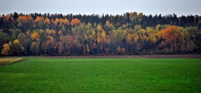 trees.farmes'.field.2013