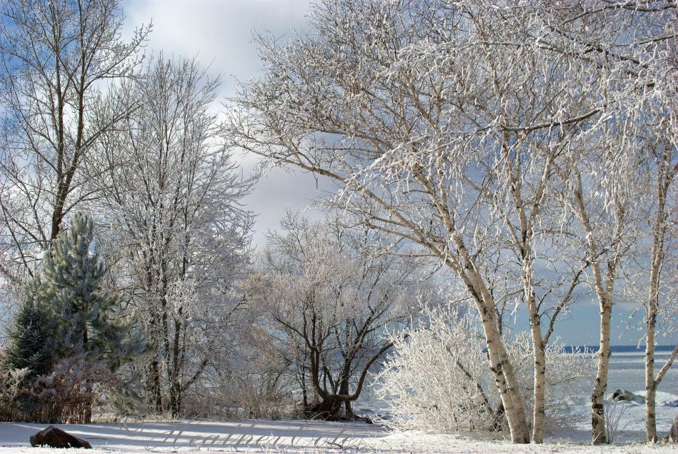 trees.white.4...2013