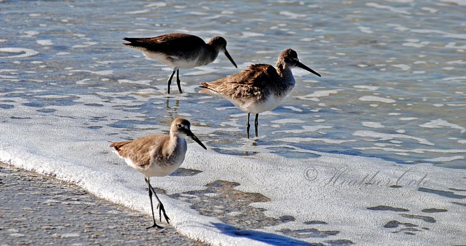 birds.marco2014...