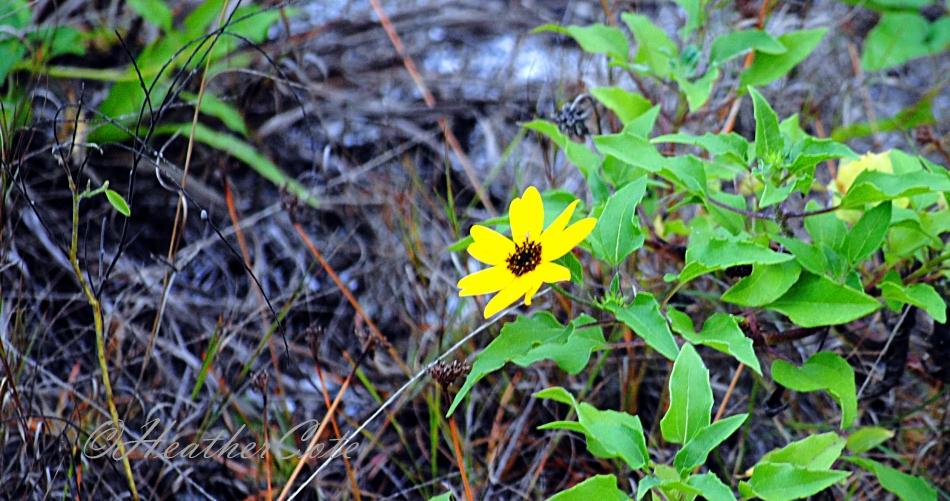 flower.yellow.2014...