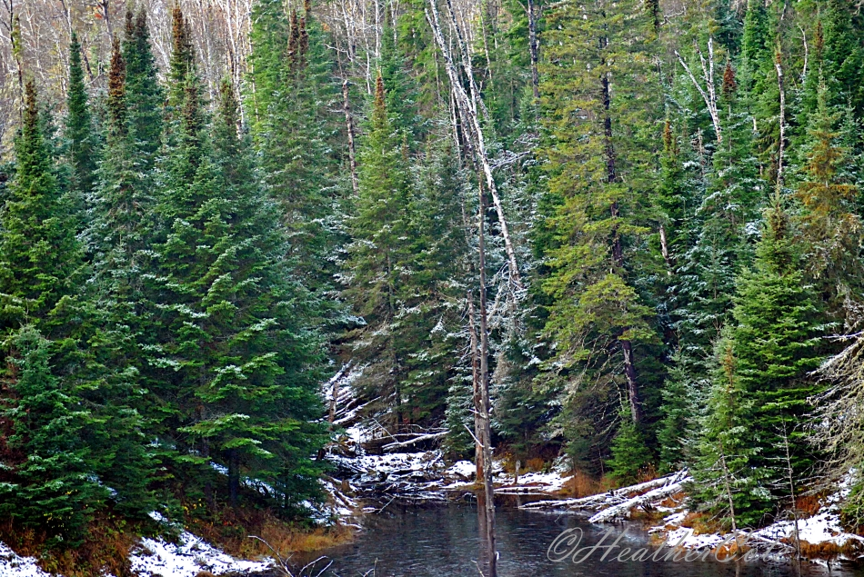 trees.2013....