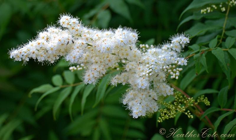 white.flower..2013