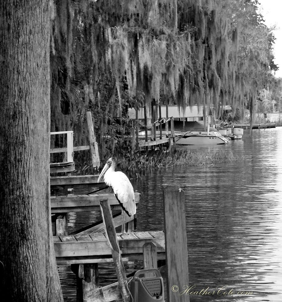 Leesburge Florida...