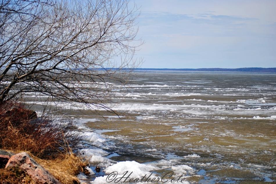 ice.tree.2.204