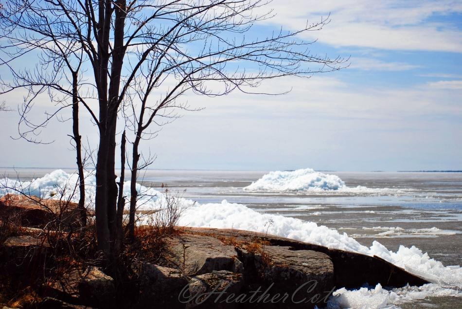 ice.tree.2014
