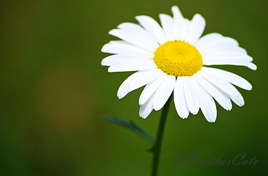daisy.2014,,,,