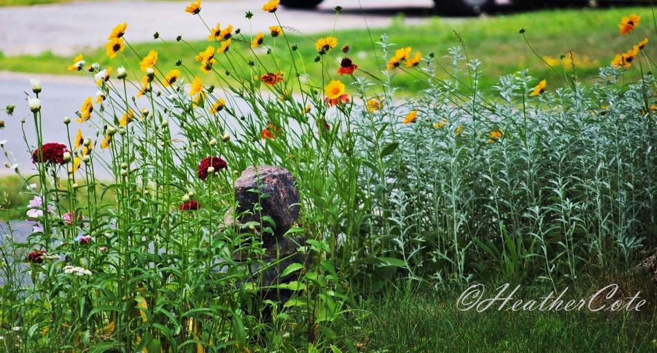 wildflowers.d103