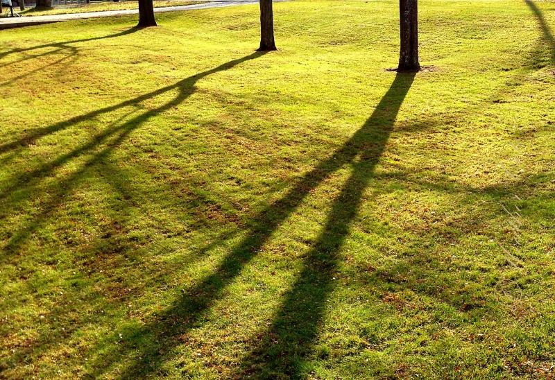 grass A.2012