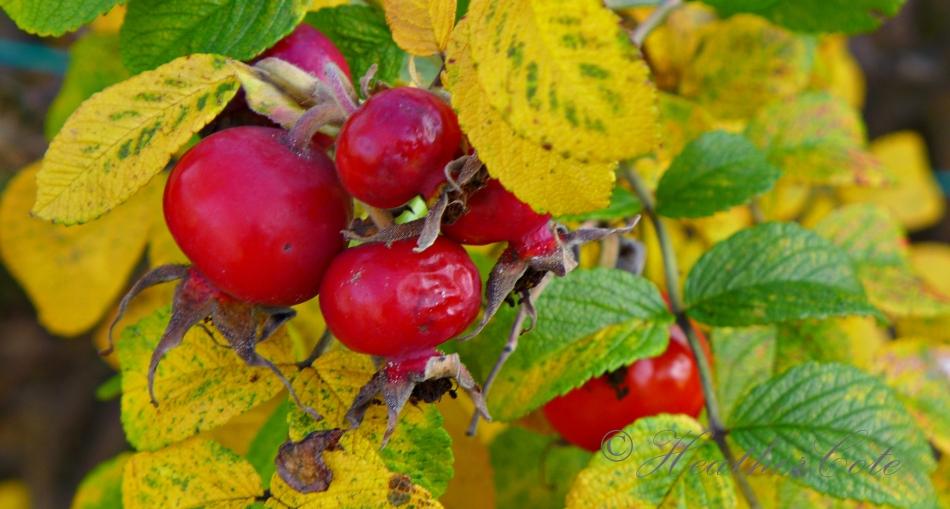 berries.10.2014